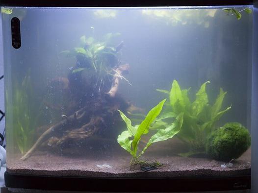 bacterie aquarium